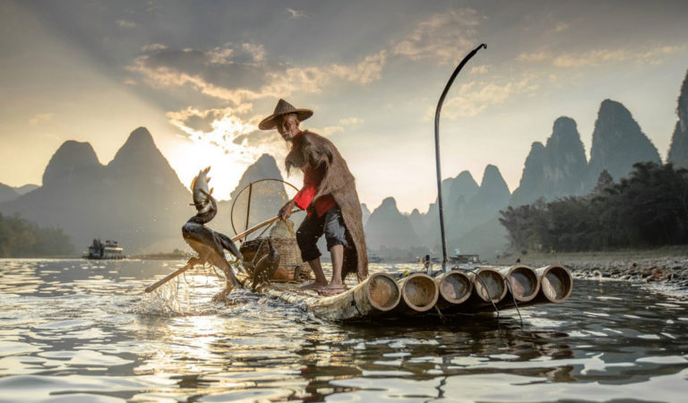 Древняя традиция ловли или тесная связь рыбаков и бакланов