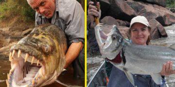 Опасные рыбы