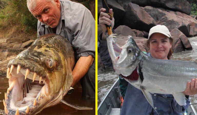ТОП-10 самых опасных рыб в мире