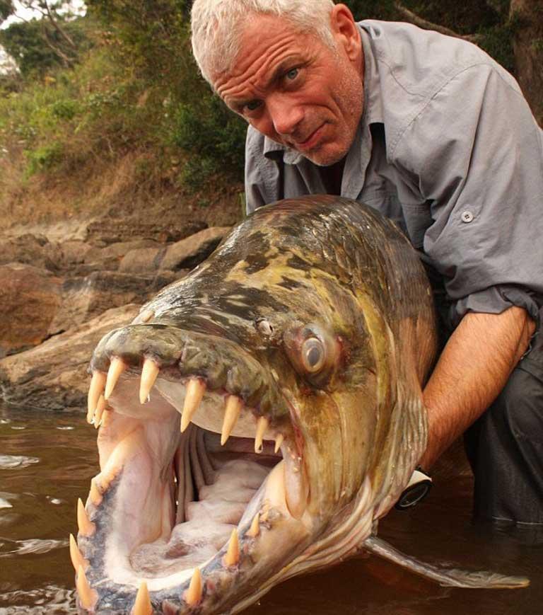 Рыба-тигр