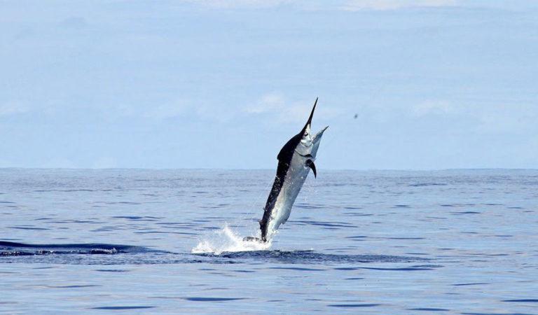 5 самых быстрых рыб в мире