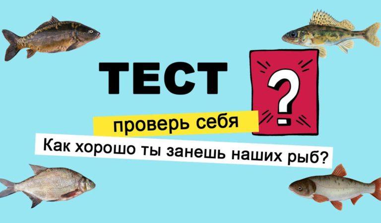 Как хорошо ты знаешь наших рыб? ТЕСТ