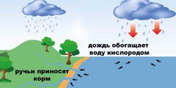 Влияние дождя на клев рыбы