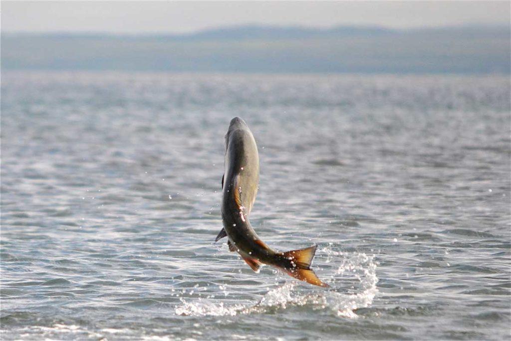 Всплеск рыбы при высоком давлении