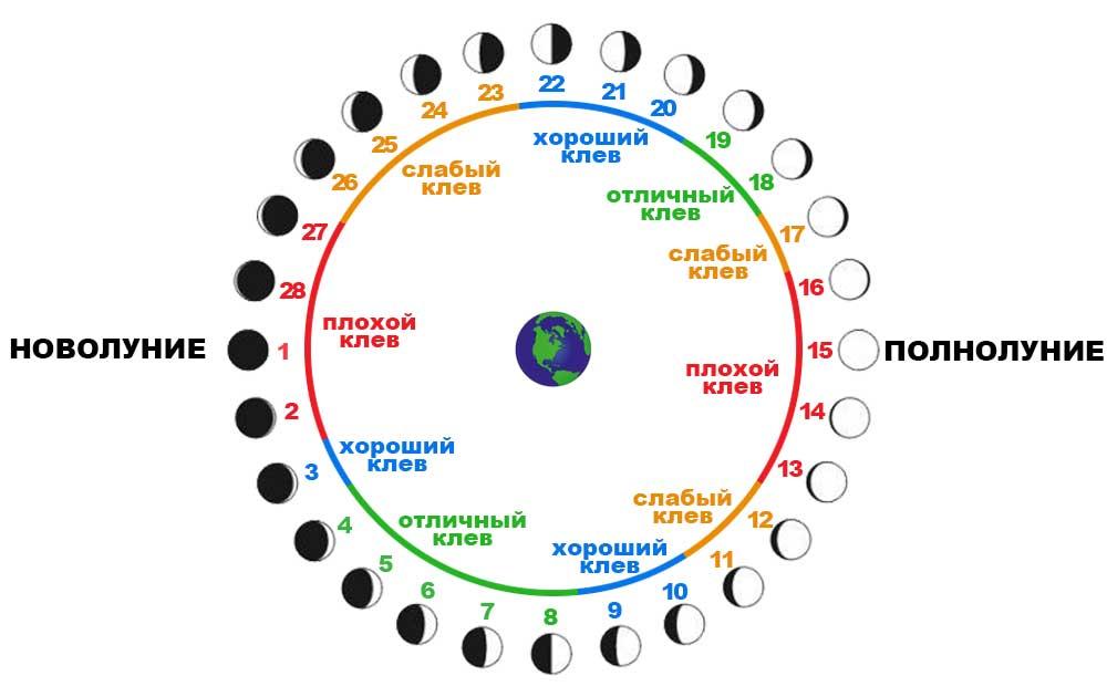 Зависимость фаз луны и клева