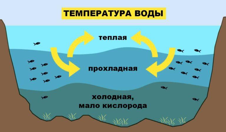 Влияние температуры воды на рыбу и ее клёв