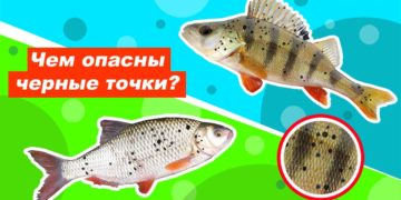 Черные точки на рыбе
