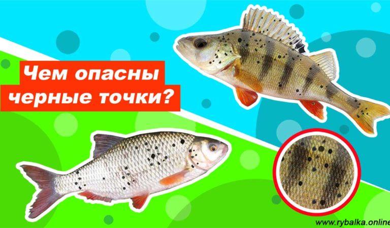 Черные точки на рыбе: что это и опасны ли они для человека
