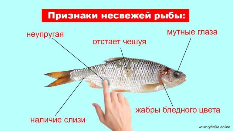 Как определить свежесть рыбы