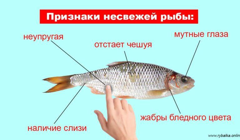 Как определить свежесть рыбы: на что обратить внимание?