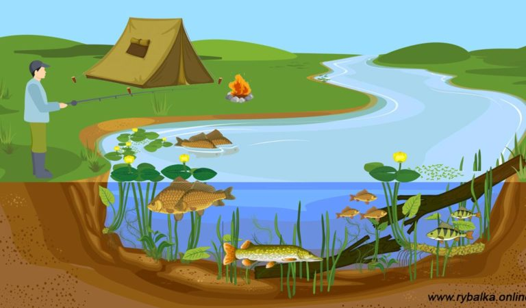 Рыбалка в июле: на что ловить рыбу и где ее искать?