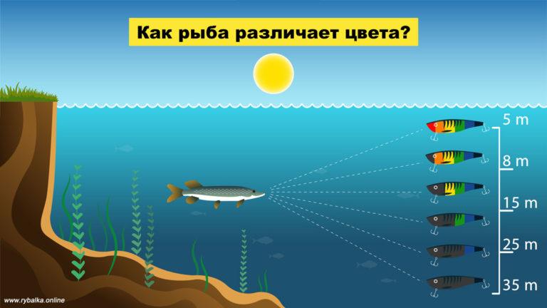 Как видят рыбы