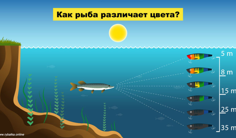 Мир глазами рыбы: как видит рыба и важен ли цвет приманки?