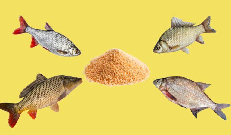 Что по вкусу белой рыбе осенней порой: лучшая прикормка своими руками